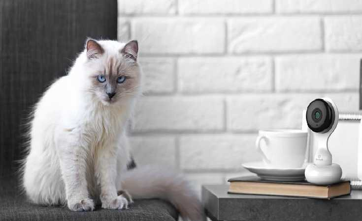 A Cat Sitting on the top of the table with the Cat Observer provided by Home Automation Company