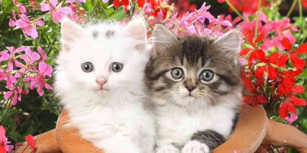 A White and Black Kiddens sitting on the beautiful flower pot.