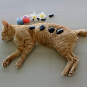 A Cat lying on the floor with four stones on its body for some massage purpose.