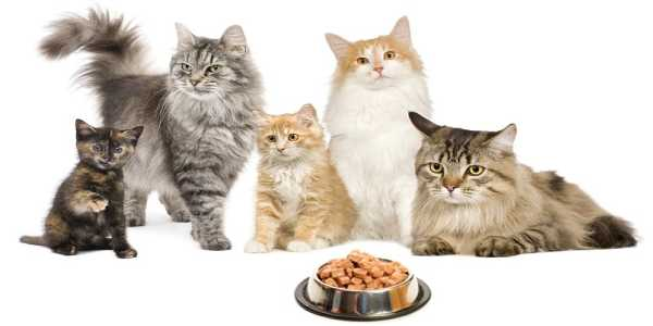 Image that resembles group of cats with some food infront of them.