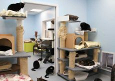 A Room with full of Cats and its Shelters