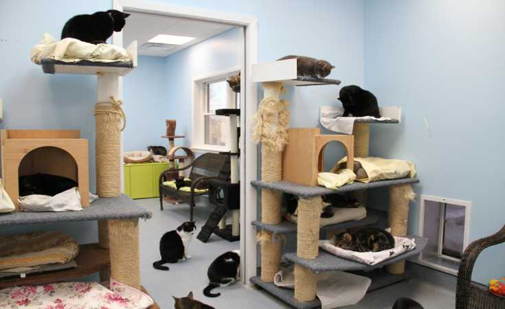 Creative Shelter Design Ideas For Your Pet Cat - Cat Care ...
